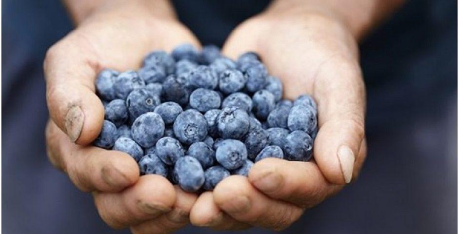 Ce nutrienti contin afinele?